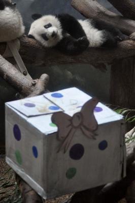 Mei Huan eyes one of the birthday presents.