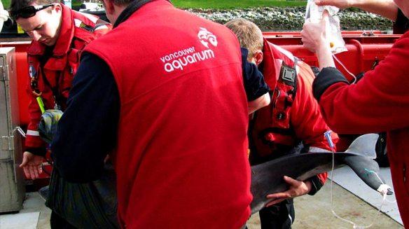 cetacean-rescue-daisy